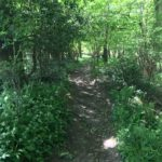 The lovely wooded path in the reserve,